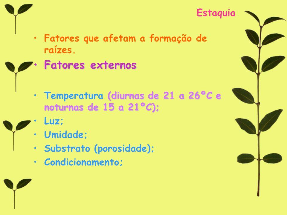 Estaquia Fatores que afetam a formação de raízes. Fatores externosFatores externos (diurnas de 21 a 26ºC e noturnas de 15 a 21ºC);Temperatura (diurnas