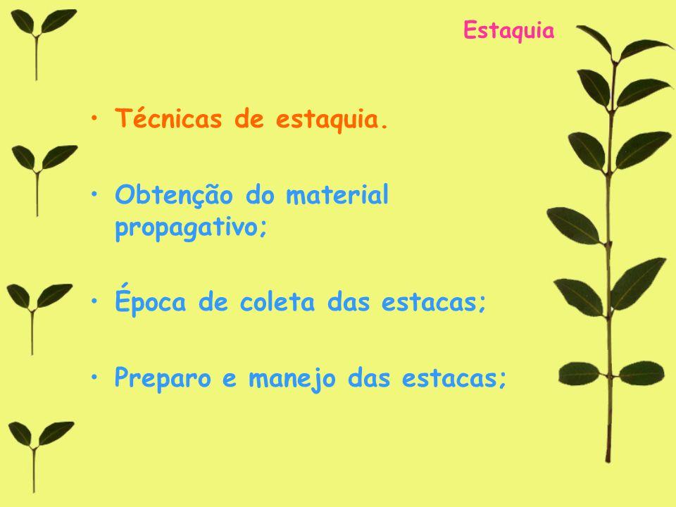Estaquia Técnicas de estaquia. Obtenção do material propagativo; Época de coleta das estacas; Preparo e manejo das estacas;