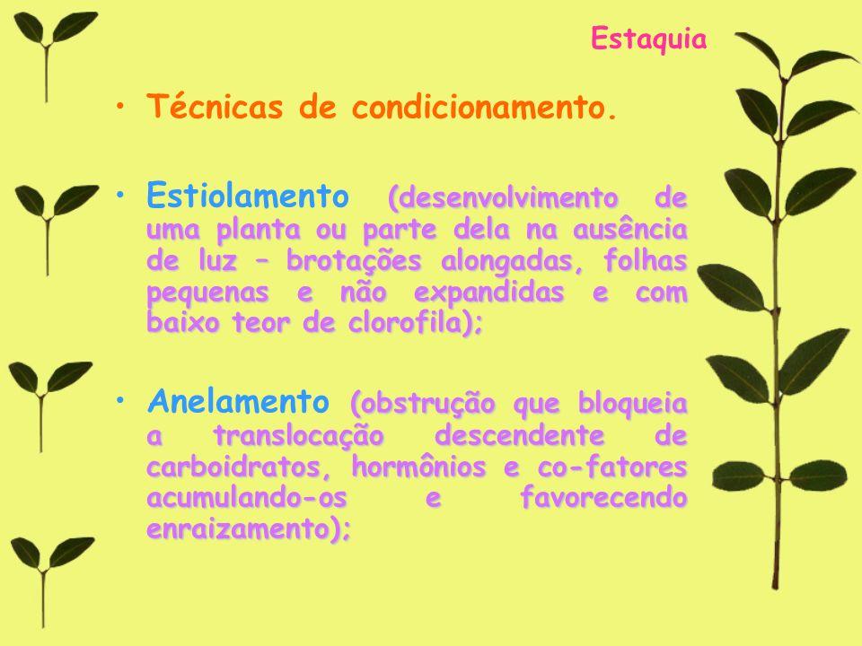 Estaquia Técnicas de condicionamento. (desenvolvimento de uma planta ou parte dela na ausência de luz – brotações alongadas, folhas pequenas e não exp
