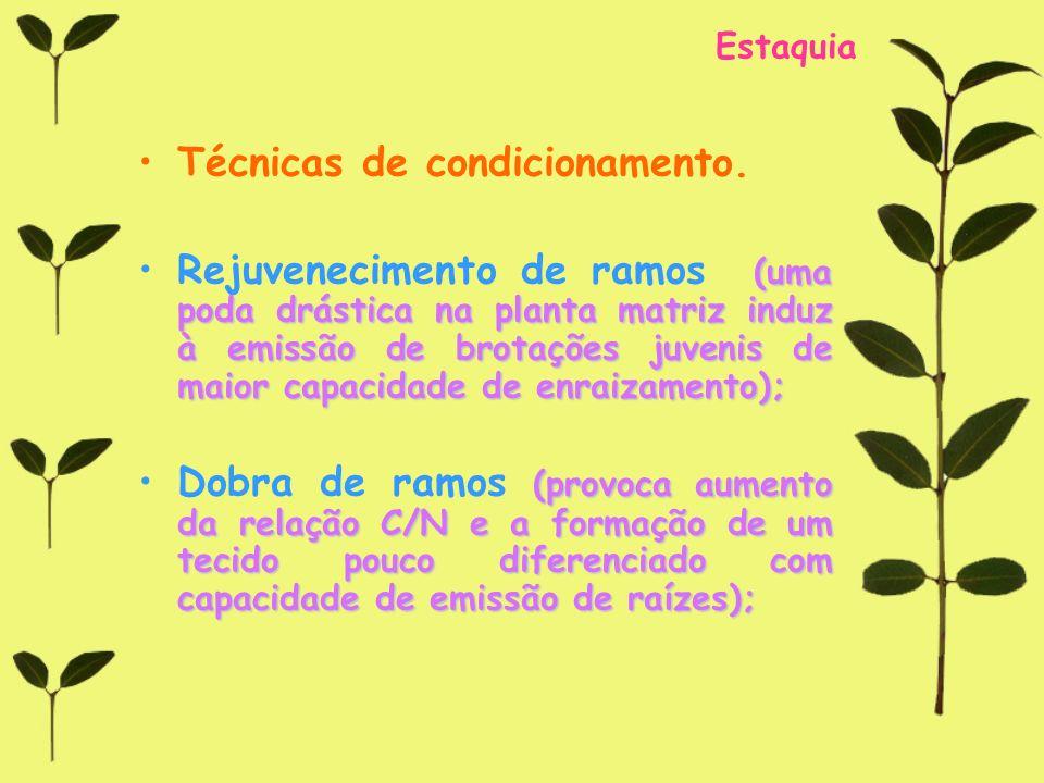 Estaquia Técnicas de condicionamento. (uma poda drástica na planta matriz induz à emissão de brotações juvenis de maior capacidade de enraizamento);Re