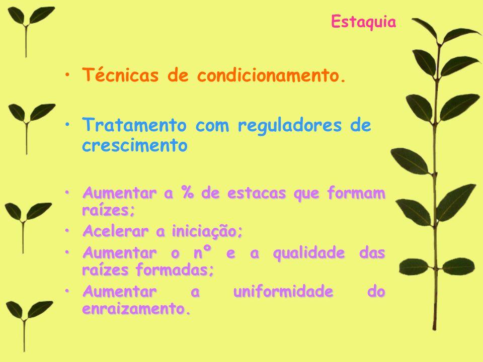 Estaquia Técnicas de condicionamento. Tratamento com reguladores de crescimento Aumentar a % de estacas que formam raízes;Aumentar a % de estacas que