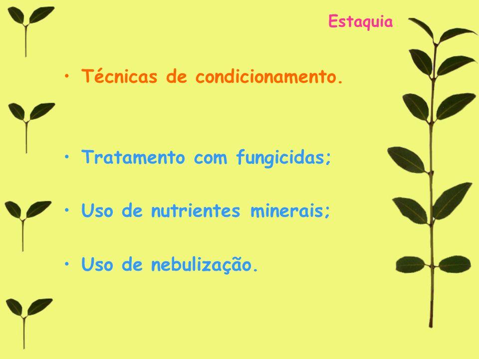 Estaquia Técnicas de condicionamento. Tratamento com fungicidas; Uso de nutrientes minerais; Uso de nebulização.