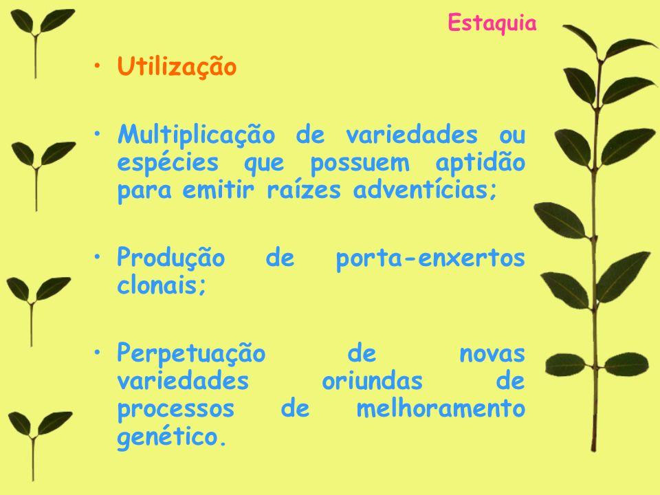 Estaquia Utilização Multiplicação de variedades ou espécies que possuem aptidão para emitir raízes adventícias; Produção de porta-enxertos clonais; Pe