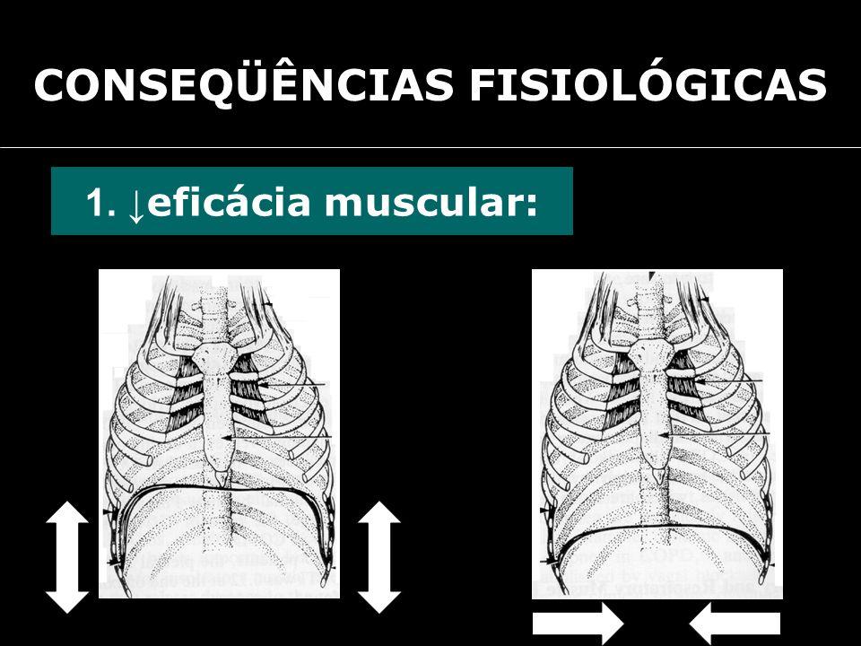 CONSEQÜÊNCIAS FISIOLÓGICAS 1. eficácia muscular: