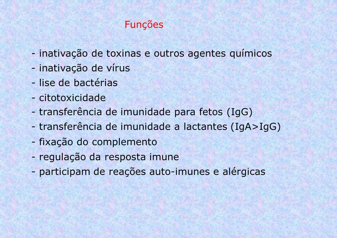Funções - inativação de toxinas e outros agentes químicos - inativação de vírus - lise de bactérias - citotoxicidade - transferência de imunidade para fetos (IgG) - transferência de imunidade a lactantes (IgA>IgG) - fixação do complemento - regulação da resposta imune - participam de reações auto-imunes e alérgicas