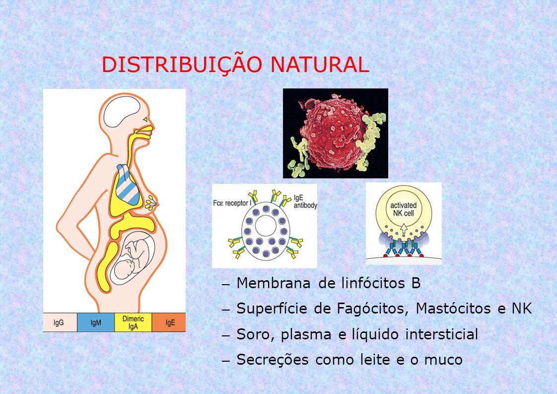– Membrana de linfócitos B – Superfície de Fagócitos, Mastócitos e NK – Soro, plasma e líquido intersticial – Secreções como leite e o muco DISTRIBUIÇ