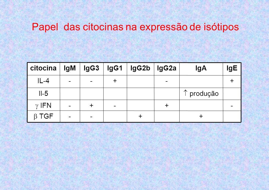 ++-- TGF -+-+- IFN produção Il-5 +-+--IL-4 IgEIgAIgG2aIgG2bIgG1IgG3IgMcitocina Papel das citocinas na expressão de isótipos