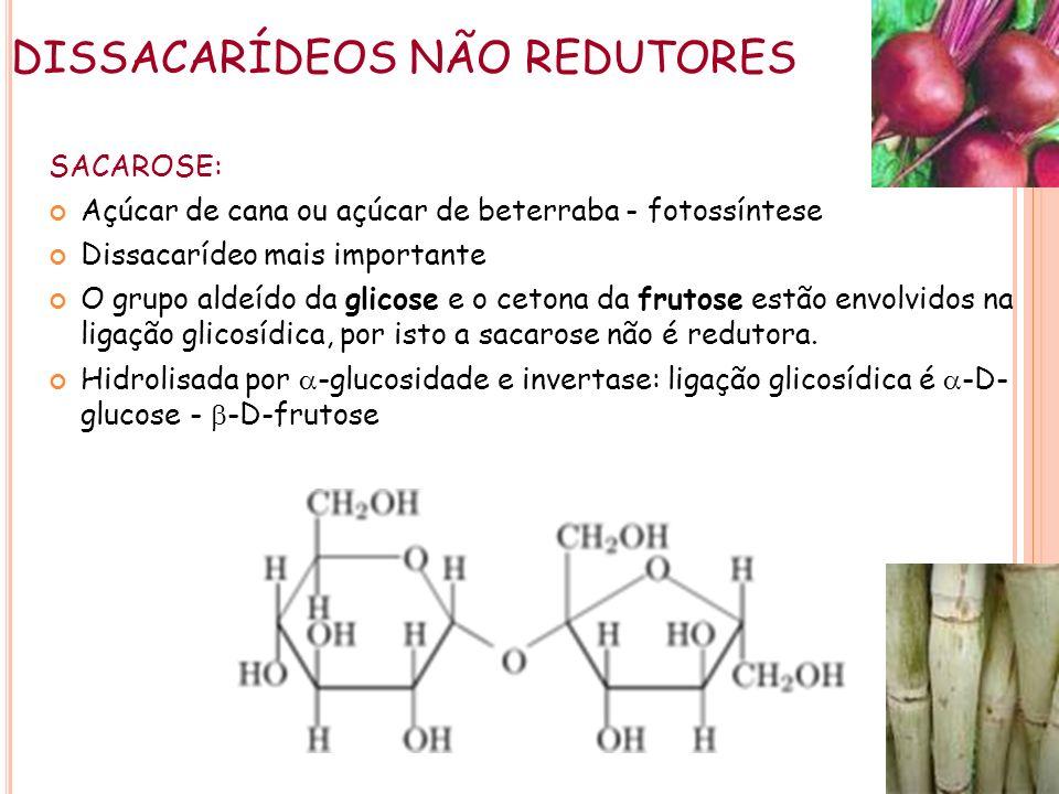 DISSACARÍDEOS NÃO REDUTORES SACAROSE: Açúcar de cana ou açúcar de beterraba - fotossíntese Dissacarídeo mais importante O grupo aldeído da glicose e o