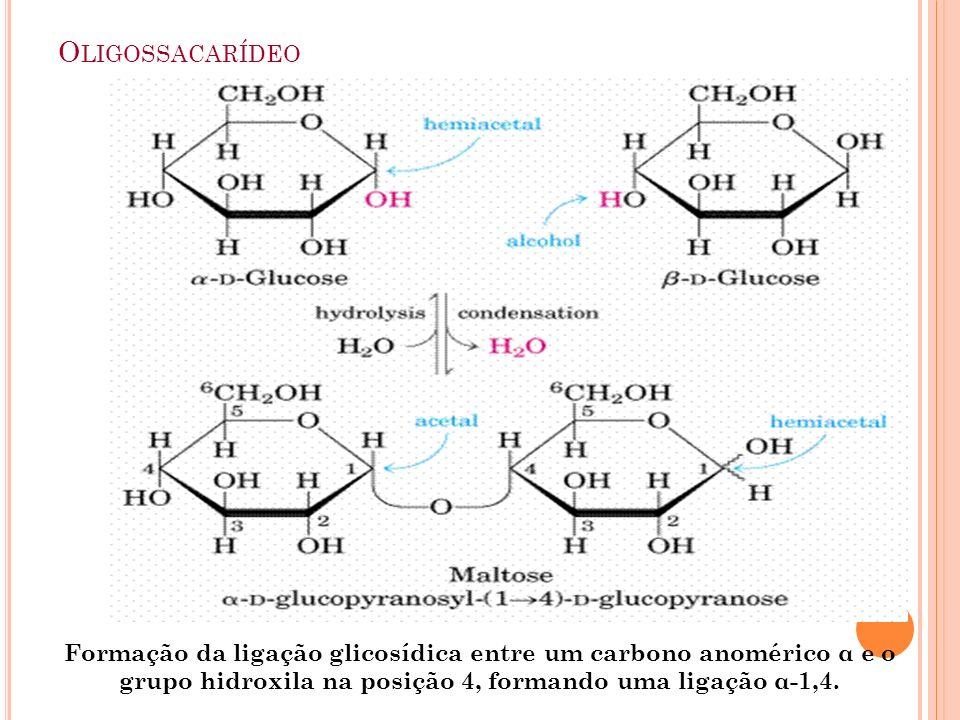O LIGOSSACARÍDEO Formação da ligação glicosídica entre um carbono anomérico α e o grupo hidroxila na posição 4, formando uma ligação α-1,4.