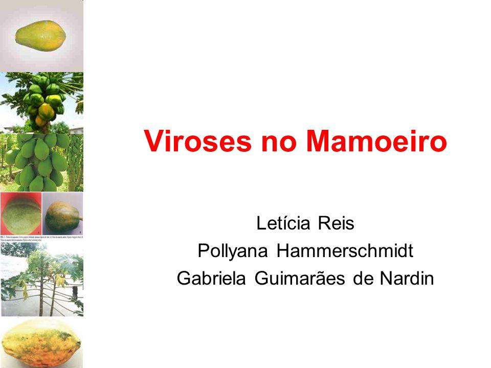 Viroses no Mamoeiro Letícia Reis Pollyana Hammerschmidt Gabriela Guimarães de Nardin