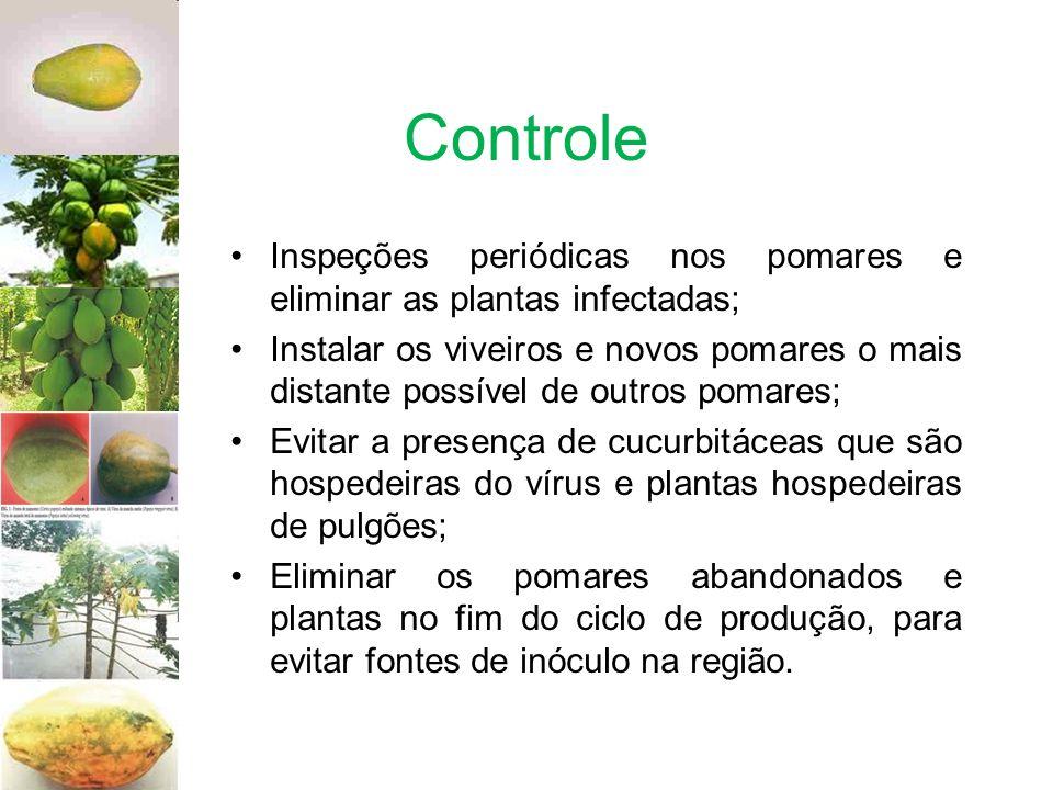 Controle Inspeções periódicas nos pomares e eliminar as plantas infectadas; Instalar os viveiros e novos pomares o mais distante possível de outros po