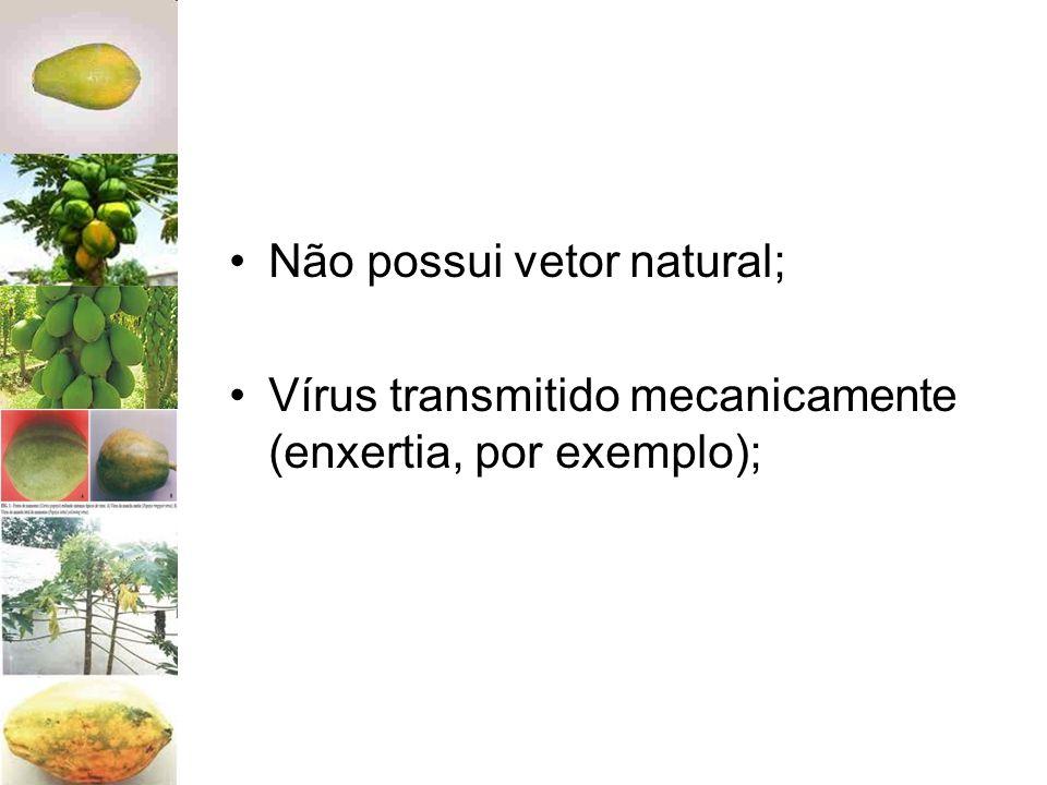 Não possui vetor natural; Vírus transmitido mecanicamente (enxertia, por exemplo);