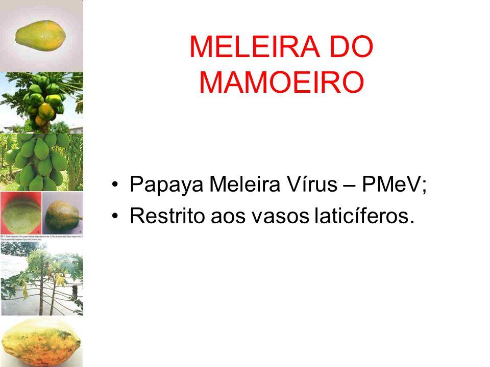 MELEIRA DO MAMOEIRO Papaya Meleira Vírus – PMeV; Restrito aos vasos laticíferos.