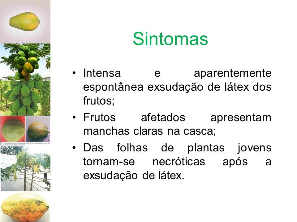 Sintomas Intensa e aparentemente espontânea exsudação de látex dos frutos; Frutos afetados apresentam manchas claras na casca; Das folhas de plantas j