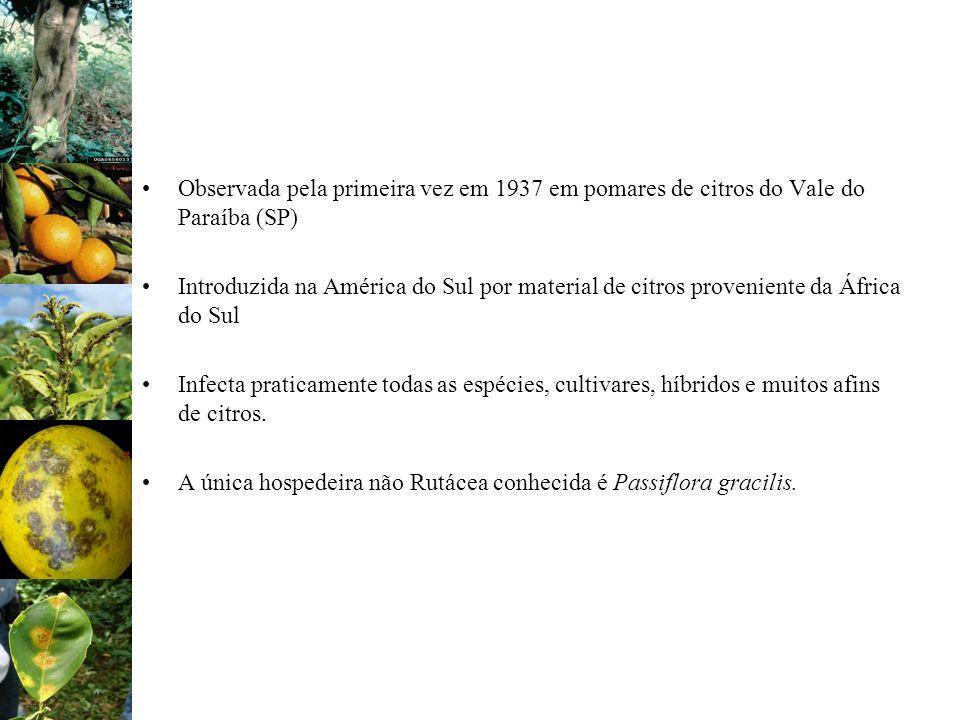 Observada pela primeira vez em 1937 em pomares de citros do Vale do Paraíba (SP) Introduzida na América do Sul por material de citros proveniente da Á