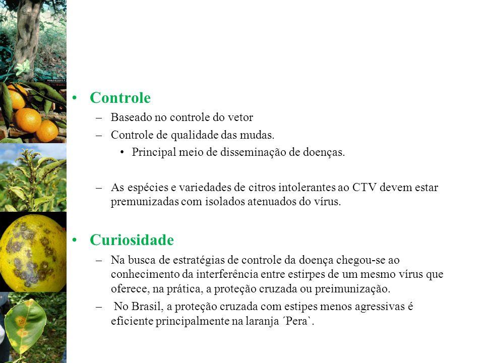 Controle –Baseado no controle do vetor –Controle de qualidade das mudas. Principal meio de disseminação de doenças. –As espécies e variedades de citro