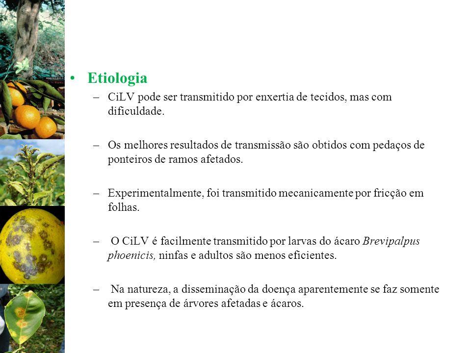 Etiologia –CiLV pode ser transmitido por enxertia de tecidos, mas com dificuldade. –Os melhores resultados de transmissão são obtidos com pedaços de p