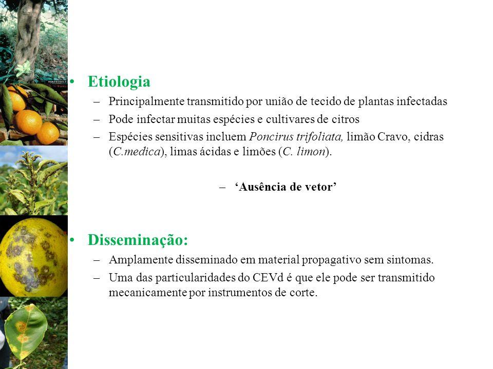 Etiologia –Principalmente transmitido por união de tecido de plantas infectadas –Pode infectar muitas espécies e cultivares de citros –Espécies sensit