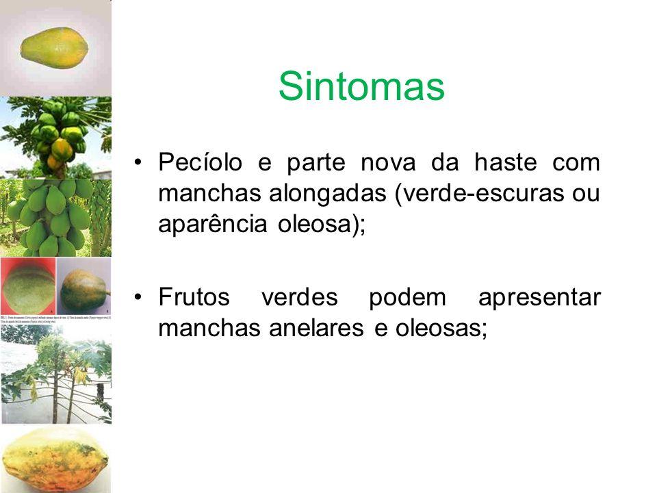 Sintomas Pecíolo e parte nova da haste com manchas alongadas (verde-escuras ou aparência oleosa); Frutos verdes podem apresentar manchas anelares e ol