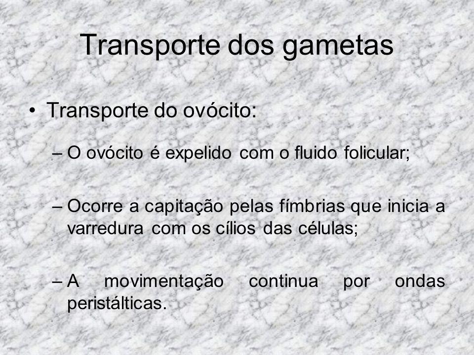 Transporte dos gametas Transporte do ovócito: –O ovócito é expelido com o fluido folicular; –Ocorre a capitação pelas fímbrias que inicia a varredura