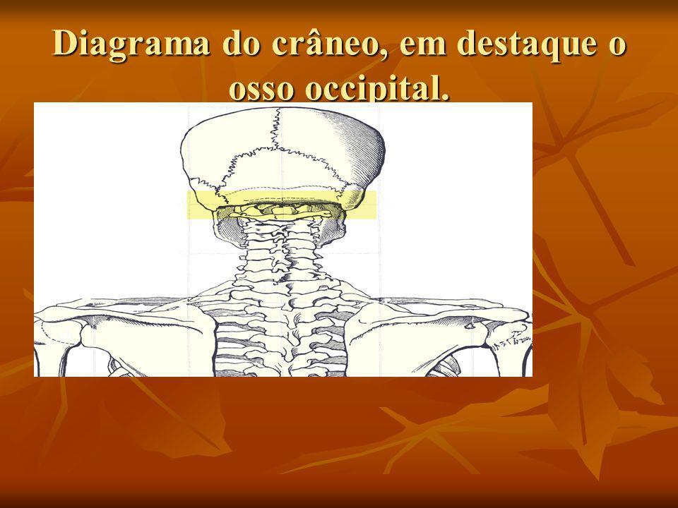 Diagrama do crâneo, em destaque o osso occipital.