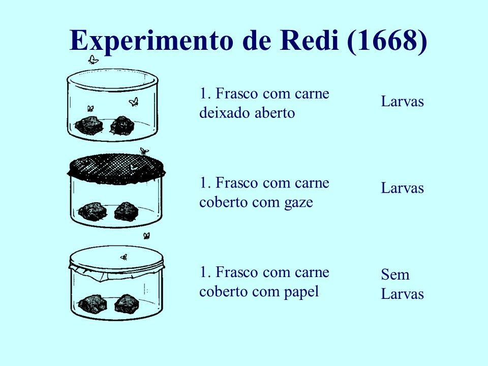 Experimento de Redi (1668) 1. Frasco com carne deixado aberto 1. Frasco com carne coberto com gaze 1. Frasco com carne coberto com papel Larvas Sem La