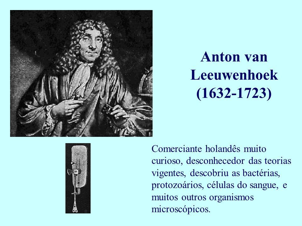 Comerciante holandês muito curioso, desconhecedor das teorias vigentes, descobriu as bactérias, protozoários, células do sangue, e muitos outros organ