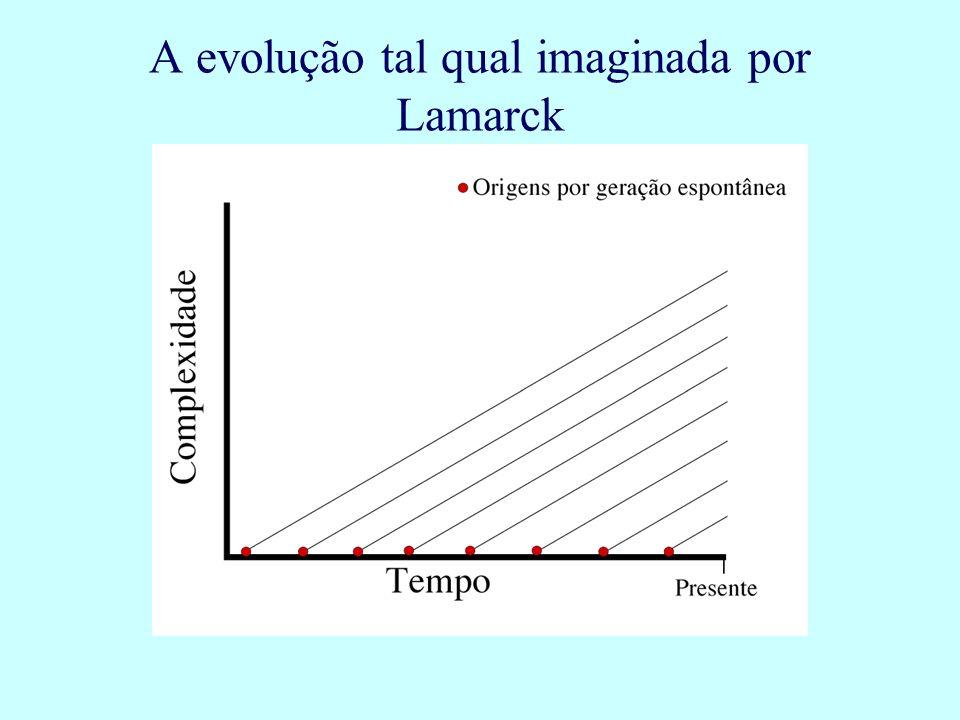 A evolução tal qual imaginada por Lamarck