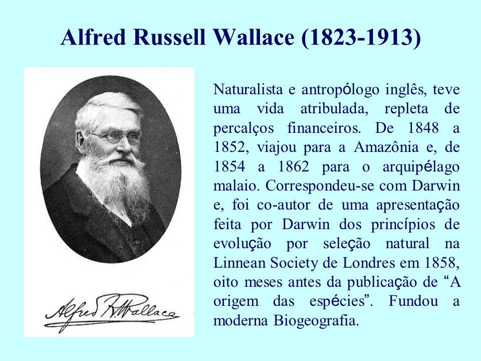 Alfred Russell Wallace (1823-1913) Naturalista e antrop ó logo inglês, teve uma vida atribulada, repleta de percalços financeiros. De 1848 a 1852, via