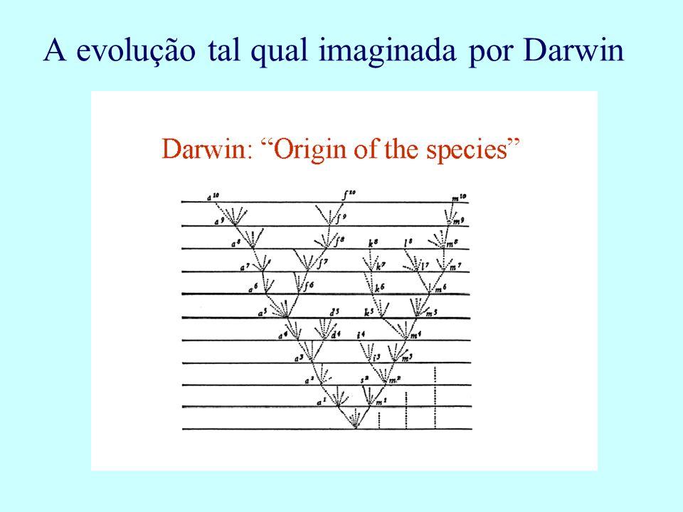 A evolução tal qual imaginada por Darwin