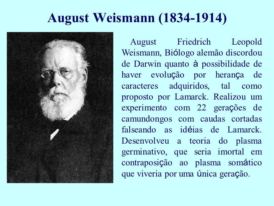 August Weismann (1834-1914) August Friedrich Leopold Weismann, Bi ó logo alemão discordou de Darwin quanto à possibilidade de haver evolu ç ão por her