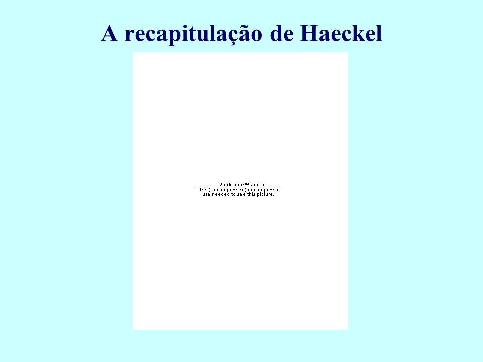 A recapitulação de Haeckel