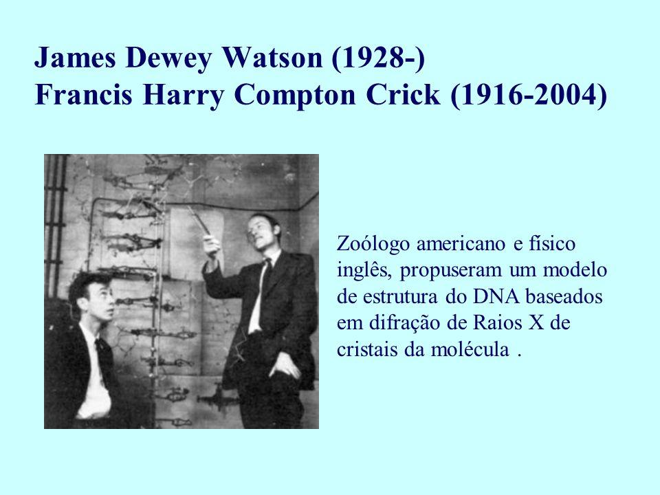 Zoólogo americano e físico inglês, propuseram um modelo de estrutura do DNA baseados em difração de Raios X de cristais da molécula. James Dewey Watso