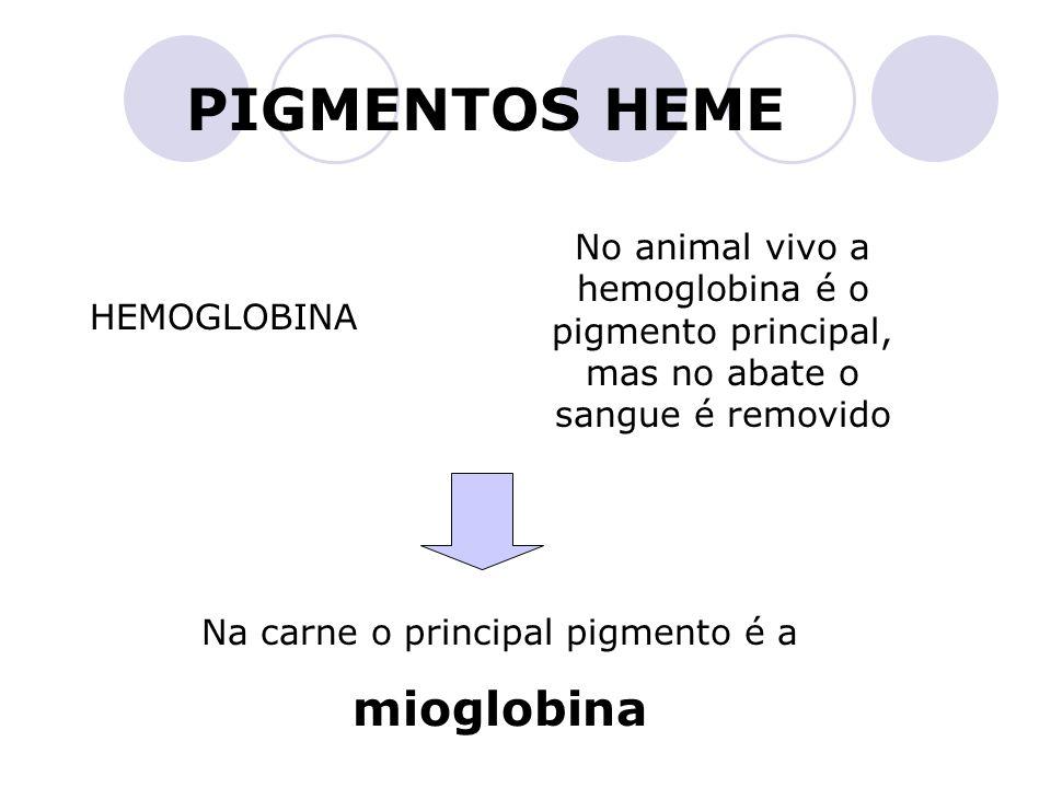 PIGMENTOS HEME HEMOGLOBINA No animal vivo a hemoglobina é o pigmento principal, mas no abate o sangue é removido Na carne o principal pigmento é a mio