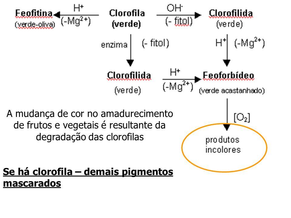 A mudança de cor no amadurecimento de frutos e vegetais é resultante da degradação das clorofilas Se há clorofila – demais pigmentos mascarados
