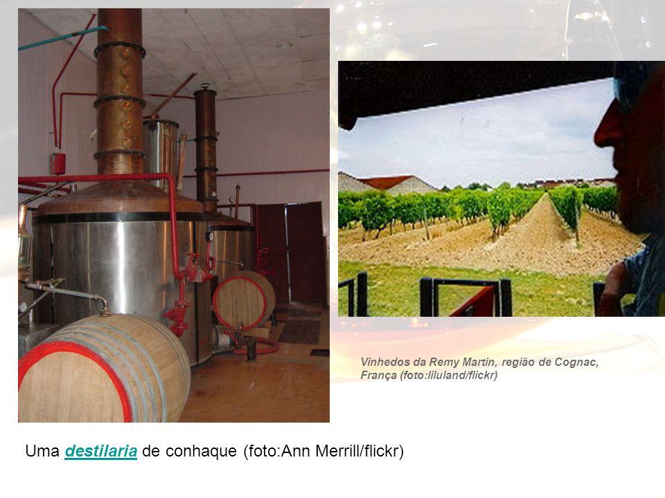Uma destilaria de conhaque (foto:Ann Merrill/flickr)destilaria Vinhedos da Remy Martin, região de Cognac, França (foto:liluland/flickr)