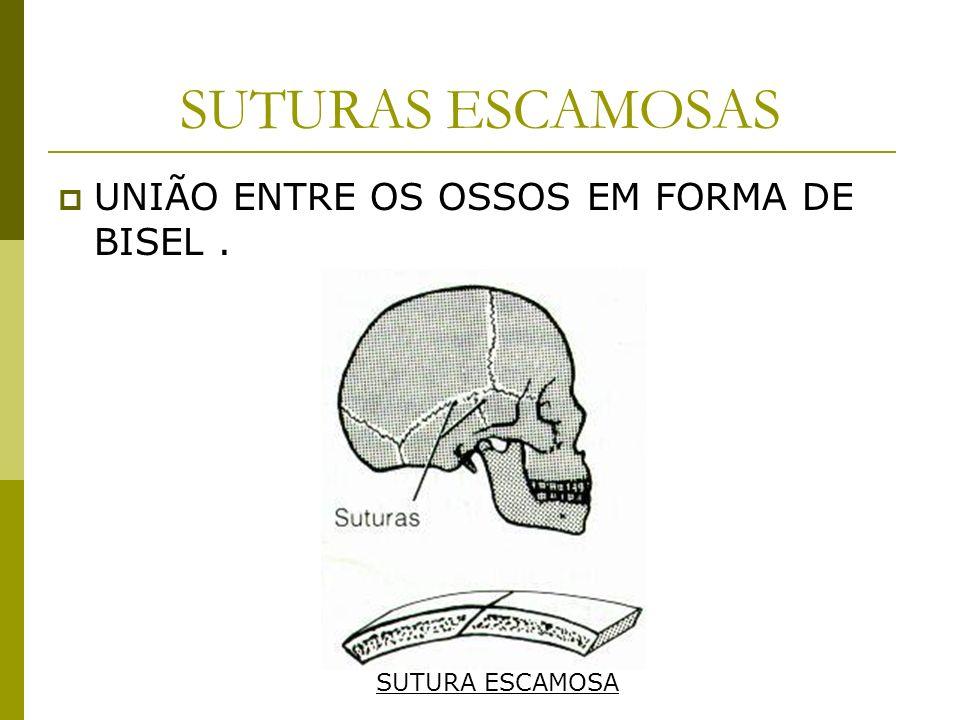 SUTURAS ESCAMOSAS UNIÃO ENTRE OS OSSOS EM FORMA DE BISEL. SUTURA ESCAMOSA