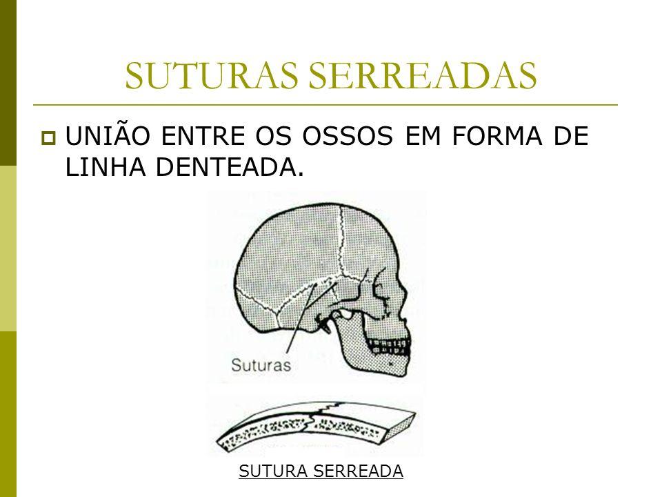 SUTURAS SERREADAS UNIÃO ENTRE OS OSSOS EM FORMA DE LINHA DENTEADA. SUTURA SERREADA