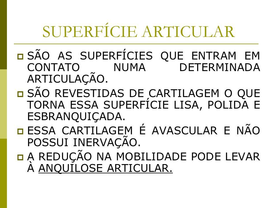SUPERFÍCIE ARTICULAR SÃO AS SUPERFÍCIES QUE ENTRAM EM CONTATO NUMA DETERMINADA ARTICULAÇÃO. SÃO REVESTIDAS DE CARTILAGEM O QUE TORNA ESSA SUPERFÍCIE L