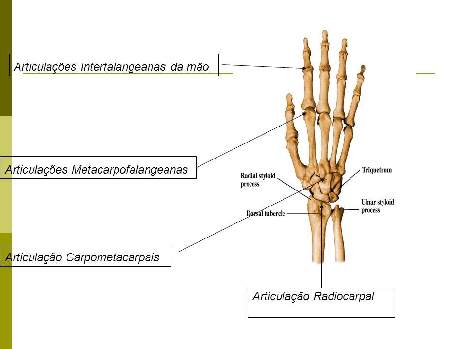 Articulação Radiocarpal Articulação Carpometacarpais Articulações Metacarpofalangeanas Articulações Interfalangeanas da mão