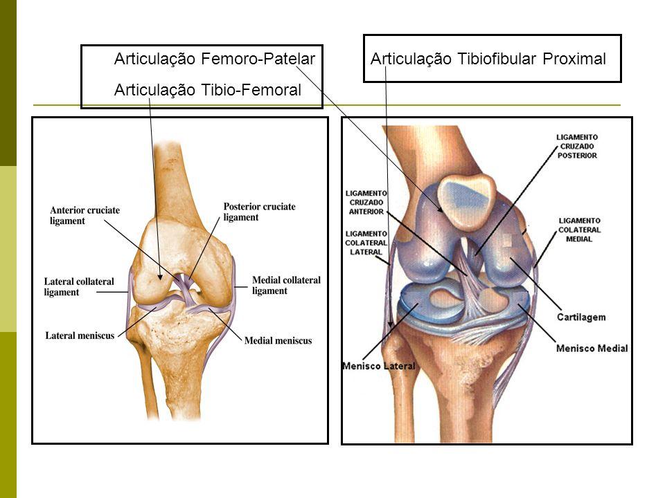Articulação Femoro-Patelar Articulação Tibio-Femoral Articulação Tibiofibular Proximal