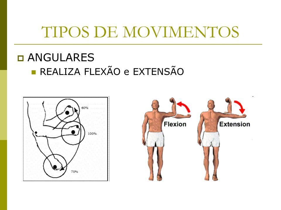 TIPOS DE MOVIMENTOS ANGULARES REALIZA FLEXÃO e EXTENSÃO