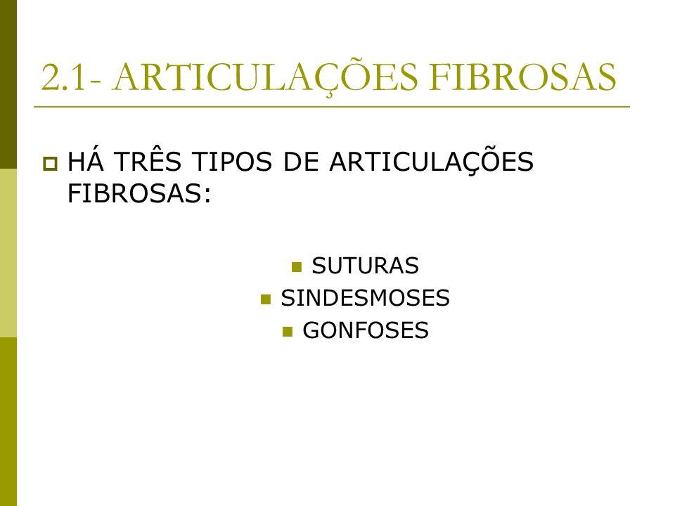 2.1- ARTICULAÇÕES FIBROSAS HÁ TRÊS TIPOS DE ARTICULAÇÕES FIBROSAS: SUTURAS SINDESMOSES GONFOSES