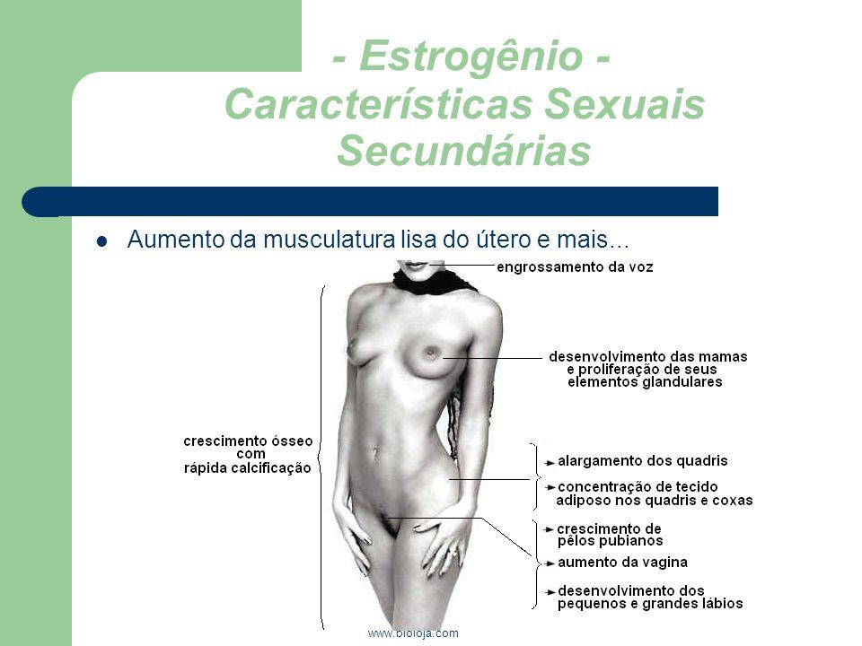 www.bioloja.com - Estrogênio - Características Sexuais Secundárias Aumento da musculatura lisa do útero e mais...