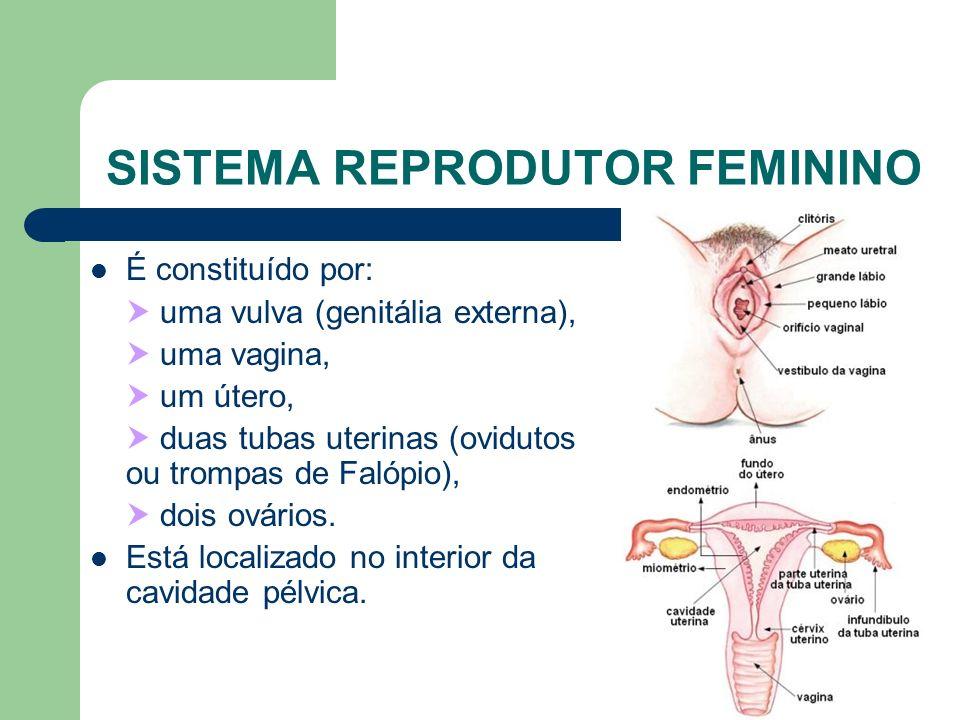 www.bioloja.com SISTEMA REPRODUTOR FEMININO É constituído por: uma vulva (genitália externa), uma vagina, um útero, duas tubas uterinas (ovidutos ou t