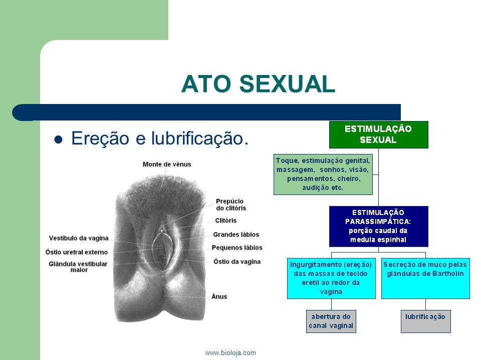 www.bioloja.com ATO SEXUAL Ereção e lubrificação.