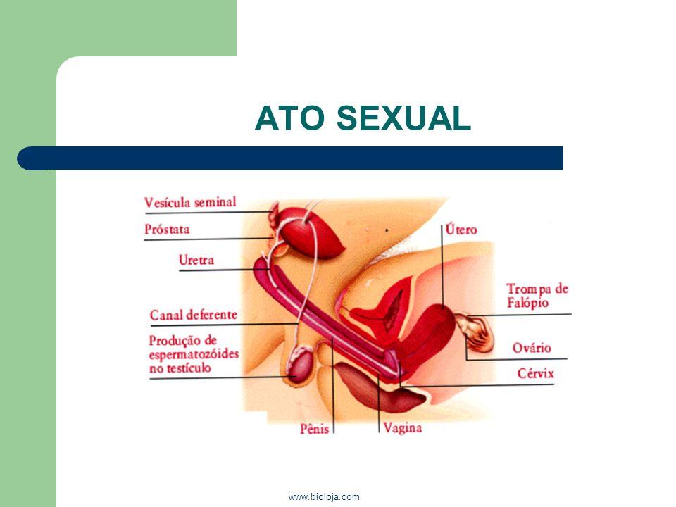 www.bioloja.com ATO SEXUAL