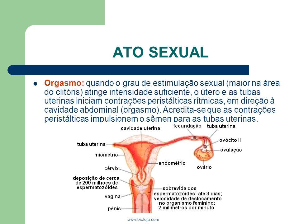 www.bioloja.com ATO SEXUAL Orgasmo: quando o grau de estimulação sexual (maior na área do clitóris) atinge intensidade suficiente, o útero e as tubas