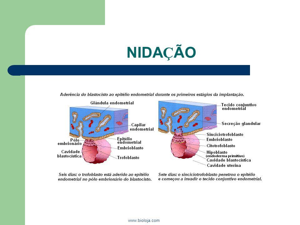 www.bioloja.com NIDA Ç ÃO