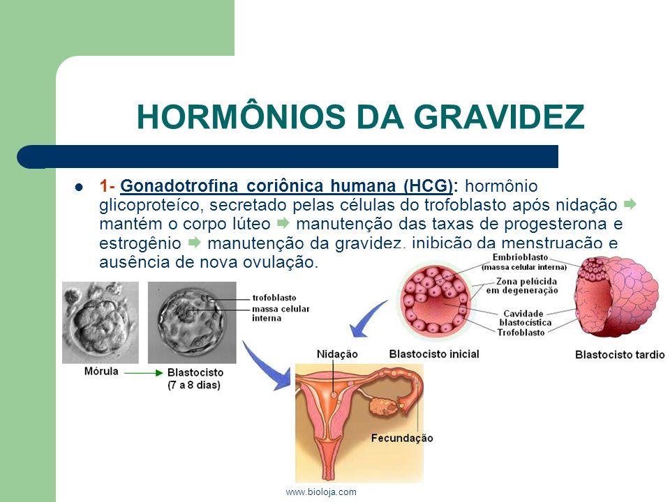www.bioloja.com HORMÔNIOS DA GRAVIDEZ 1- Gonadotrofina coriônica humana (HCG): hormônio glicoproteíco, secretado pelas células do trofoblasto após nid